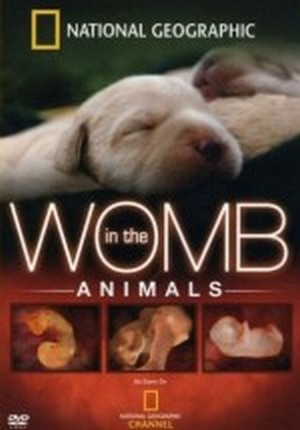 Anne Karnında – Womb in the Animals (2014)