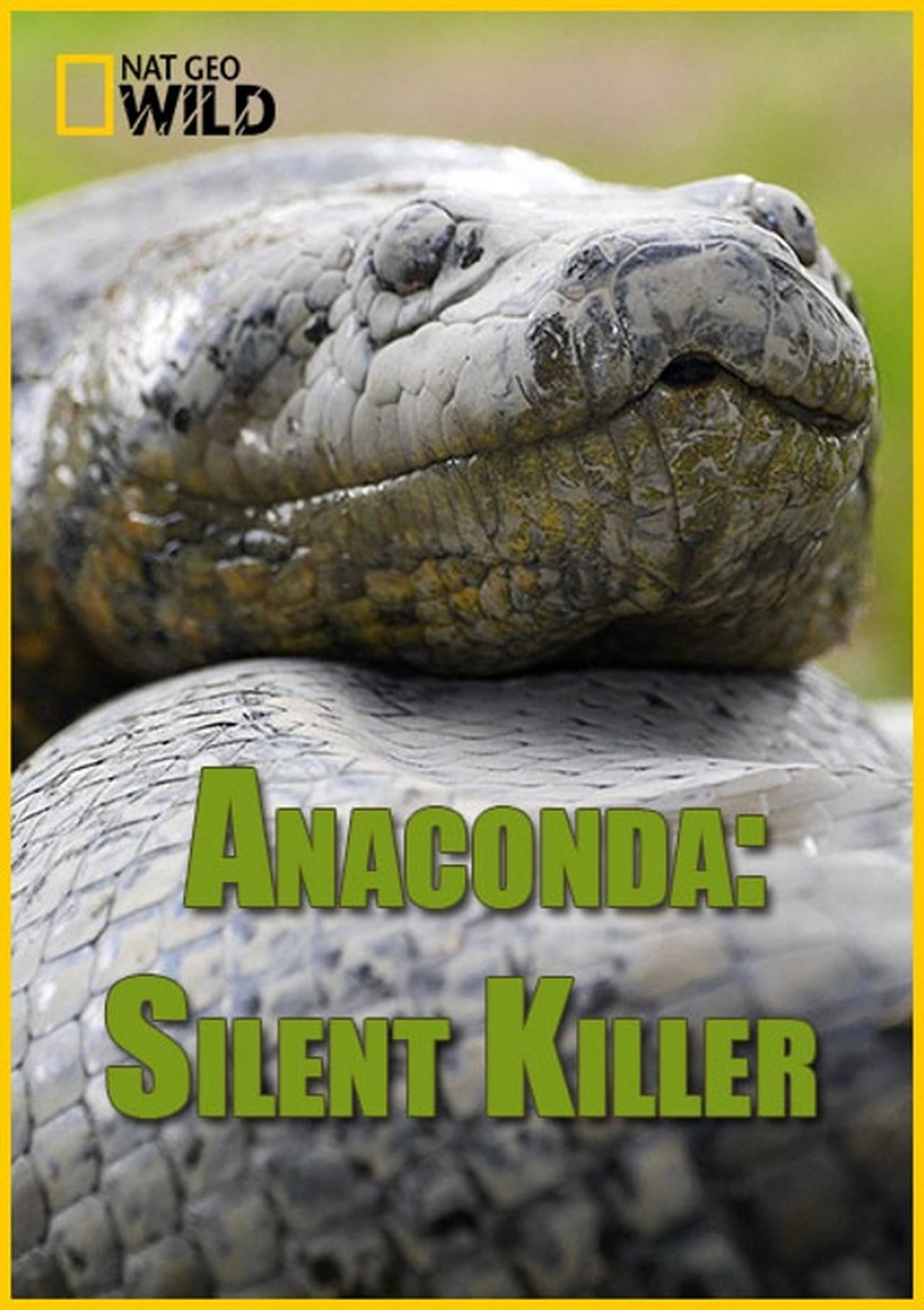 Anakonda: Sessiz Katil – Anaconda: Silent Killer (2014)